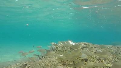 buceo el medano snorkeling