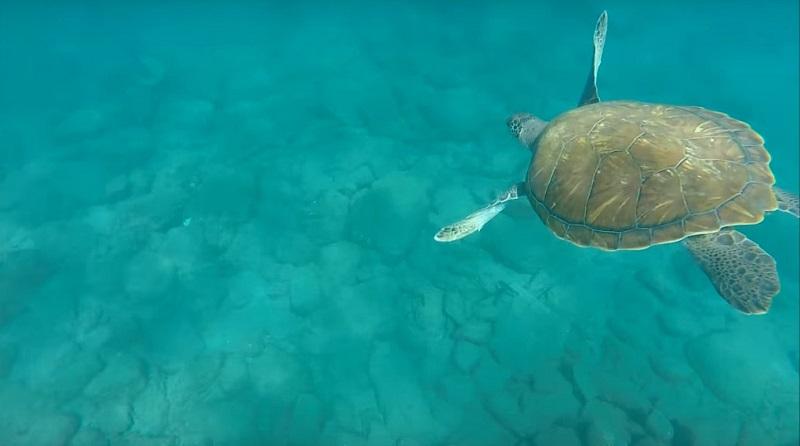 buceo tortugas armeñime